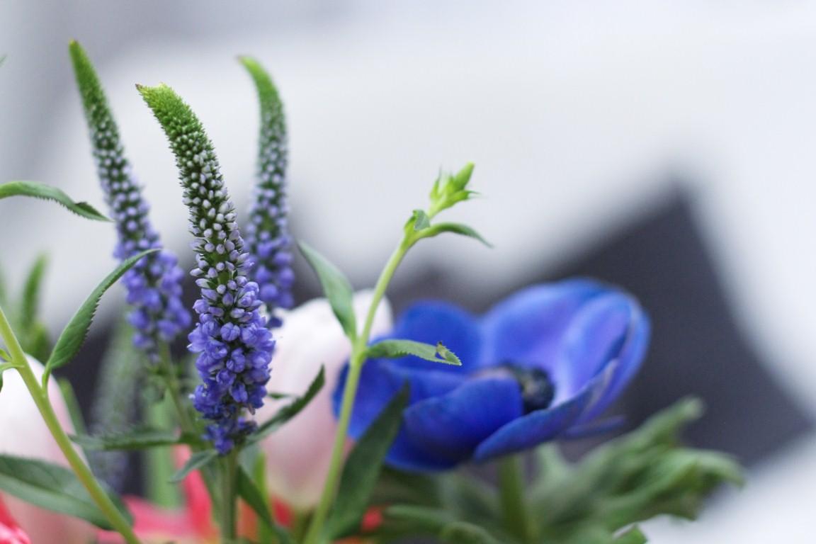 Lieblingspflanze im Februar - Frühlingsstrauß - design and BLOOM